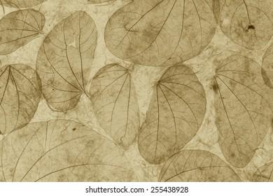 Natural leaves paper texture vintage closeup background