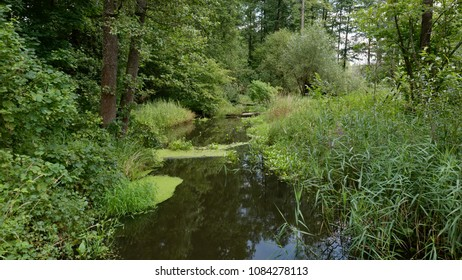 Natural Lesna river in summer midday,Balowieza Forest,Poland,Europe