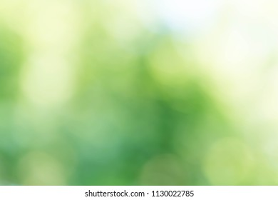 Natural light background bokeh