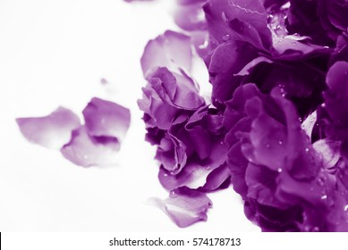 natural light and shadow in vintage style of blur purple roses and purple rose petals in bath decorated for special period. Romantic set up for Valentine Day,Honeymoon,Wedding Anniversary