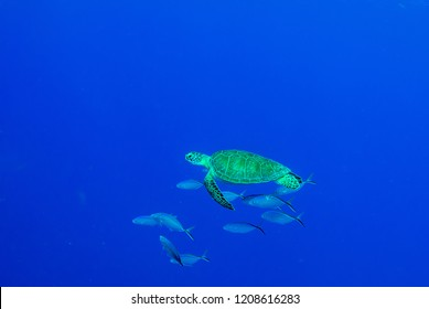 Natural light shots of hawksbill turtles hanging around in the water surrounded by fish. It looked like the group of underwater creatures were just hanging out with eachother