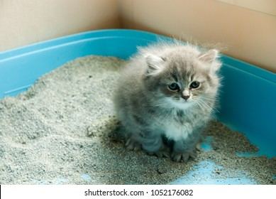 Natural lighting and shadow of blur grey Persian- Maine coon kitten is using toilet . newborn concept. adorable kitten background with copy space. adorable kitten concept.