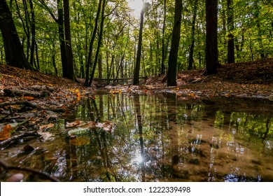 Natural lowland forest stream in the autumn during sunrise in the early morning