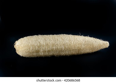 natural luffa Sponge isolate on white background in asean spa