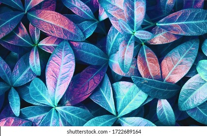 Natural macro texture of beautiful leaves toned in blue and purple pink tones. Flat lay. - Shutterstock ID 1722689164