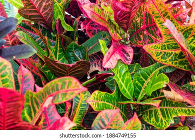 Natural macro texture of beautiful leaves toned in magenta and bright green tones. Flat lay - Shutterstock ID 1884749155