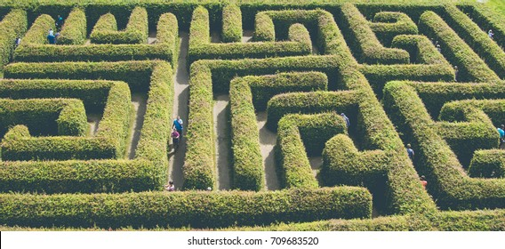 natural maze from the hedge,good fun and entertainment.