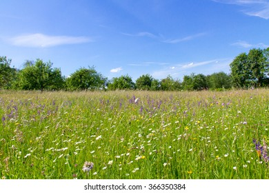 Natural meadow in spring