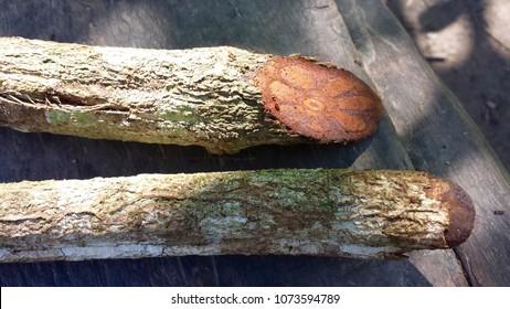 Natural Medicine Bark