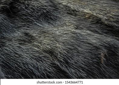 Natural mink fur. Texture of mink fur