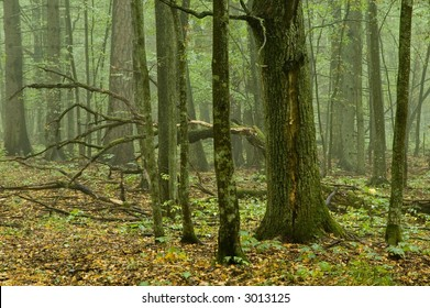 Natural mixed forest after rain,autumn