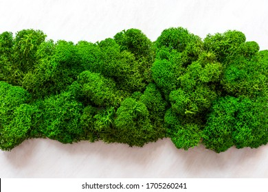 Natural moss texture on white wooden background. Top view, copy space. St. Patrick day background.
