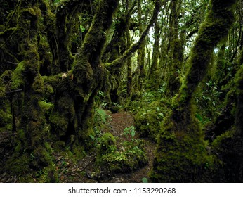 natural mossy forest at tropical country