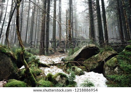 Natural mountain forest