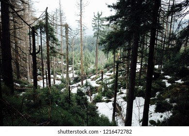 Natural mountain forest in the Harz national Park with snow holes