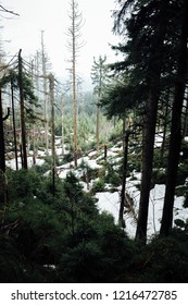 Natural mountain forest in the Harz national Park with snow holes, Portrait