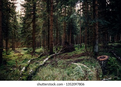 Natural mountain forest in the Harz national Park