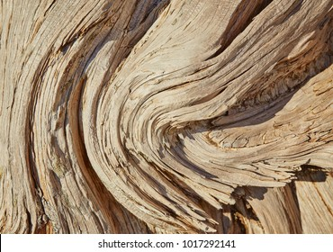 Natural old wood texture of tree stump vintage background with cracks. Brown bark of Elm Seamless Tileable Texture closeup. Wooden texture of cut tree trunk.