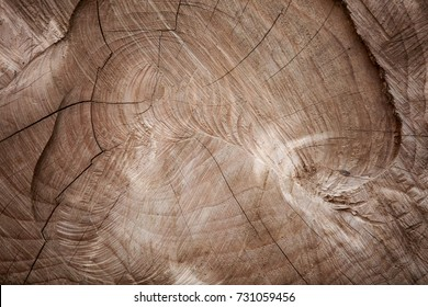 Natural old wood texture of tree stump vintage background with cracks. Brown bark of Elm Seamless Texture closeup. Wooden texture of cut tree trunk. Obsolete wood texture with curves.