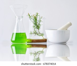 Natural organic botany and scientific glassware, Alternative herb medicine, Natural skin care beauty products, Research and development concept. (Selective Focus)