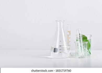 Natürliche organische Extraktion und grüne pflanzliche Blätter, Wissenschaftliche Glaswaren im Labor.