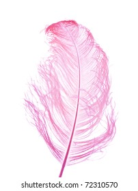 natural ostrich feather dyed lilac-pink; isolated on white background;