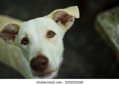 Natural outdoor close up portrait of lovely cute white dog looking at camera