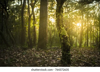 Natural outdoors bokeh background in green and yellow tones with sunset