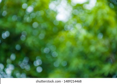 Natural outdoors bokeh in green and yellow tones