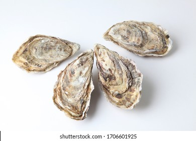 natural oysters as gourmet sea food