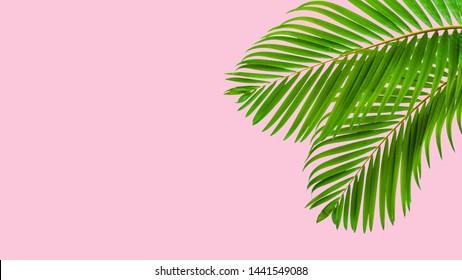 Natural palm leaf on pastel pink background