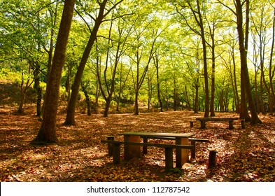 Natural Park in Autumn with with trees and deciduous leaves