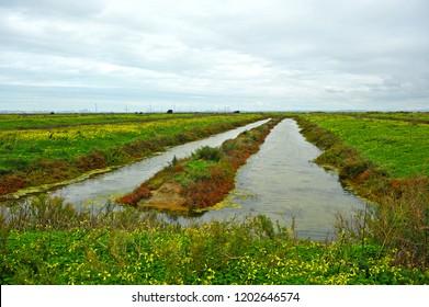 Natural park Bay of Cadiz, abandoned salt marshes, Andalusia, Spain