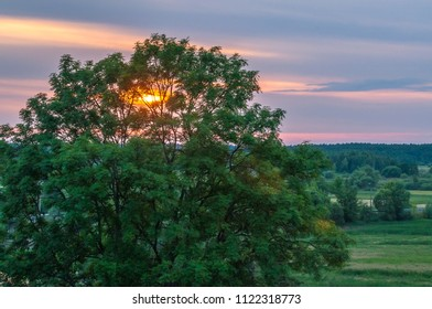Natural Park of Biebrza Valley - sunrise cross a tree leaves