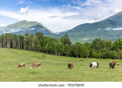 Natural pasture