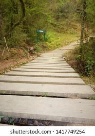 natural path argentina Salta green