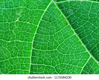 Natural pattern of design in leaf vein can be used as background