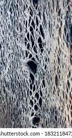 Natural pattern. Inside an old log of wood.