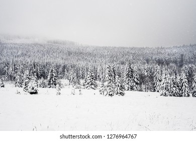 Natural photo of snowstorm in the forest next to road with snowy trees during cold winter.
