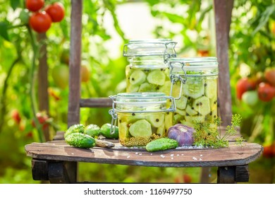 Natural pickled cucumbers in small summer greenhouse