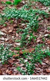 Natural pine bark portrait photo. Green and Brown Flowerbed design. Flowerbed Mulching with natural brown pine bark mulch.