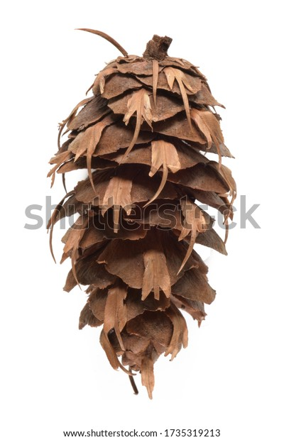 Natural pine cone isolated on white background.