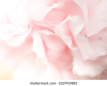 natural pink rose background of vintage light show the fresh of flora in the morning time, idea of simple life of green organic flower