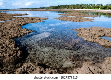 Natural pool between corals and rocks at low tide near the beach in Bahia, Brazil.