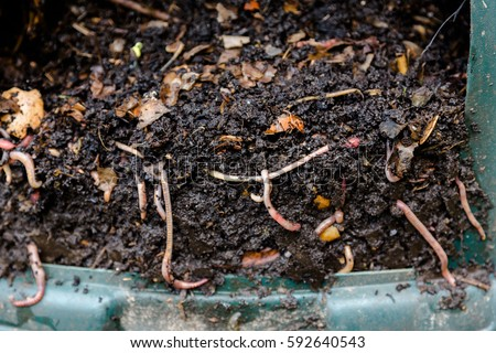 Natural, processed homemade compost in a plastic barrel with visible earthworms and the remains of waste. Horizontal full frame composition