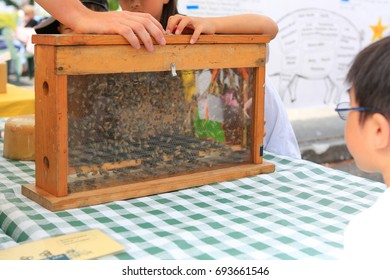 Natural raw and unfiltered honey at the farmers market. Honey bee colony in a bee hive.