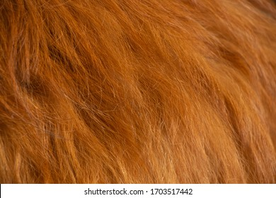natural red hair of an animal in the background close-up