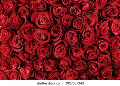 Natural red roses background. flower background