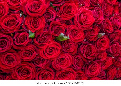 Natural red roses background. top view