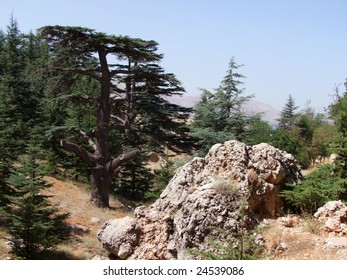 Natural reserve lebanon